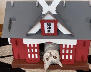 ダンボール猫神社